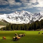 Fairy Meadows: Picture of my dreams